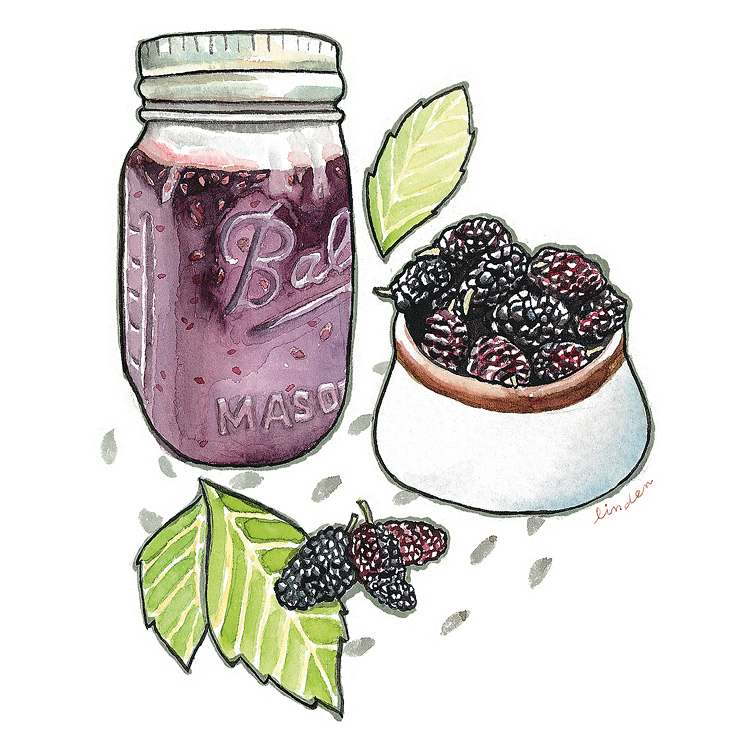 blackberry jam illustration