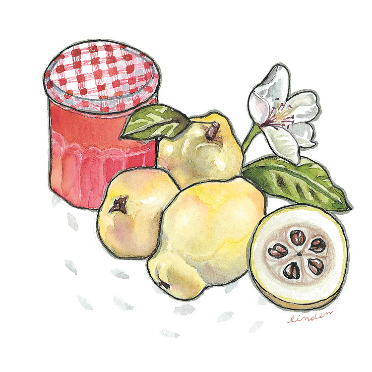quince jam illustration